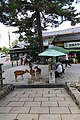 Shika Senbei (15180042473).jpg