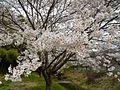 Shinshushinmachi Kamijo, Nagano, Nagano Prefecture 381-2404, Japan - panoramio (2).jpg