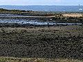 Shoreline, Ballymacormick Point (3) - geograph.org.uk - 728794.jpg