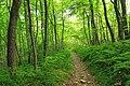 Short Hike (7) (20418201326).jpg