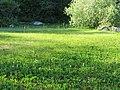 Sillviks naturreservat ängsull 04.jpg