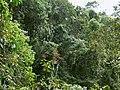 Sinharaja regnskog.jpg