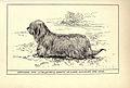 Skye Terrier BDL.jpg