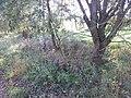 Slatiny - panoramio (9).jpg