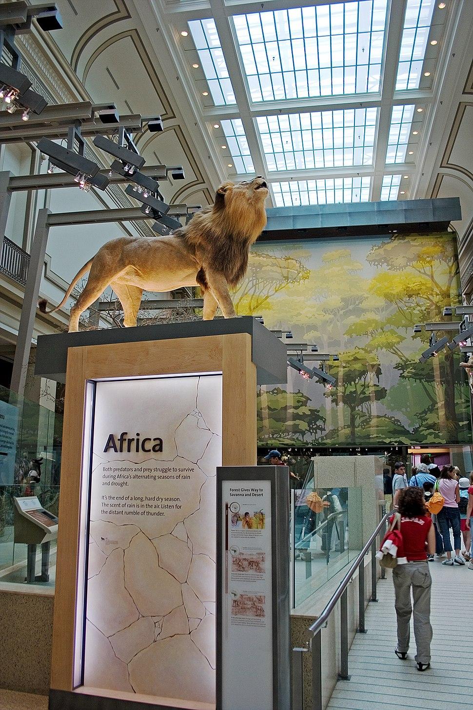 Smithsonian Hall of Mammals