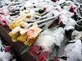 Sníh na květinách.jpg