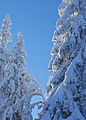 Snow and sunshine - 1 (3266806859).jpg