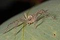 Spider (33753752865).jpg