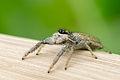Spider 02 (MK).jpg
