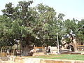 St. Mary's Church of Ayia Napa and the surrounding area with old trees - 18.JPG