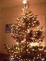 Starr 031207-0005 Cryptomeria japonica.jpg