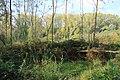 Steenbergse bossen 41.jpg
