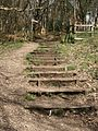 Steps from the Hunter's Path - geograph.org.uk - 1243259.jpg