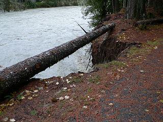 Stillaguamish River 26686.JPG