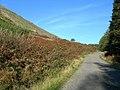 Stinchar Valley Slope - geograph.org.uk - 260699.jpg