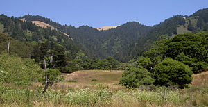 Bolinas Ridge - Stinson Gulch in 2009 with the crest of Bolinas Ridge forming the horizon.