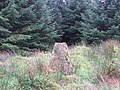 Stone by the side of the Forestry Track. - geograph.org.uk - 255118.jpg