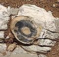 Stone in Belluno.jpg
