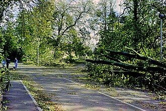 Great Storm of 1987 - Partially cleared storm damage, Chelmsford