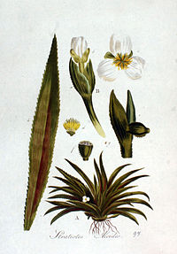 Ілюстрація водяного різака у книзі