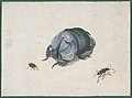Studies of a Blue Beetle and Insects MET DP800002.jpg