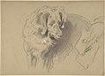 Study of a Dog MET DP804683.jpg