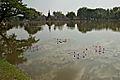 Sukhothai park pond.jpg