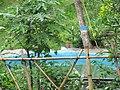 Sukuti beach swimming pool.jpg