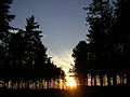 Sunset in the Longdown Inclosure, New Forest - geograph.org.uk - 25415.jpg
