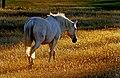 Sunset pastures. (16557585635).jpg