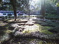 Sunshine Garden.jpg