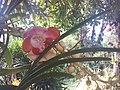 Suvarnabhumi Orchids Farm IMG 20160322 080120 (27447086745).jpg