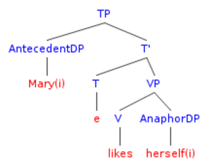 """Bound variable pronoun - Image: Syntax tree for """"Mary likes herself"""" adapted from Sportiche et al"""