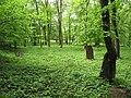 Třebotovský židovský hřbitov, pohled.jpg