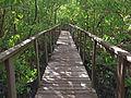 Tablado del Bosque de Boquerón, Cabo Rojo.jpg