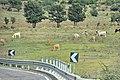 Tarquinia 2014 -SS1- by-RaBoe 093.jpg