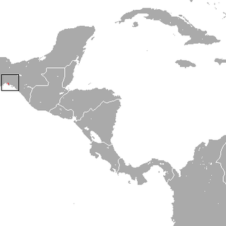 Tehuantepec jackrabbit