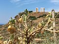 Temple of Poseidon 3637.jpg