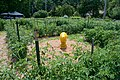 The Bear in the Tomato Maze (4748261531).jpg