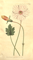 The Botanical Magazine, Plate 385 (Volume 11, 1797).png