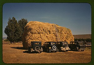 Delta County, Colorado - Hay stack and automobiles of peach pickers, Delta County, 1940.