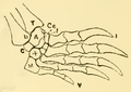 The Osteology of the Reptiles-206 fghg fgh fgh g r g.png