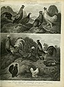 The cyclopaedia; or, Universal dictionary of arts, sciences, and literature. Plates (1820) (20633421190).jpg