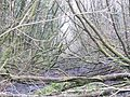 The old railway line - a tad blocked - Jan 2012 - panoramio.jpg
