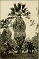 The ornamental trees of Hawaii (1917) (14579483027).jpg