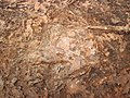 Theropod dinosaur footprint in sandstone (Kayenta Formation or Navajo Sandstone, Lower Jurassic; Potash-Poison Spider dinosaur tracksite, Williams Bottom, west of Moab, Utah, USA) 27 (32809012480).jpg