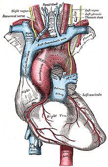 Schema artere aorte abdominale