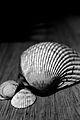 Three Shells.JPG