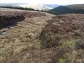 Towards Alport Valley Plantations - geograph.org.uk - 1242133.jpg