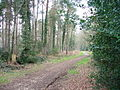 Track in Alice Holt Forest - geograph.org.uk - 383155.jpg
